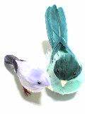 鳥Love☆(●'Θ'●)